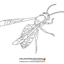 Dibujo para colorear : La abeja