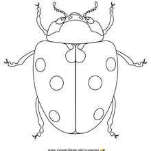 La mariquita - Dibujos para Colorear y Pintar - Dibujos para colorear ANIMALES - Dibujos INSECTOS para colorear - Dibujos para pintar MARIQUITA