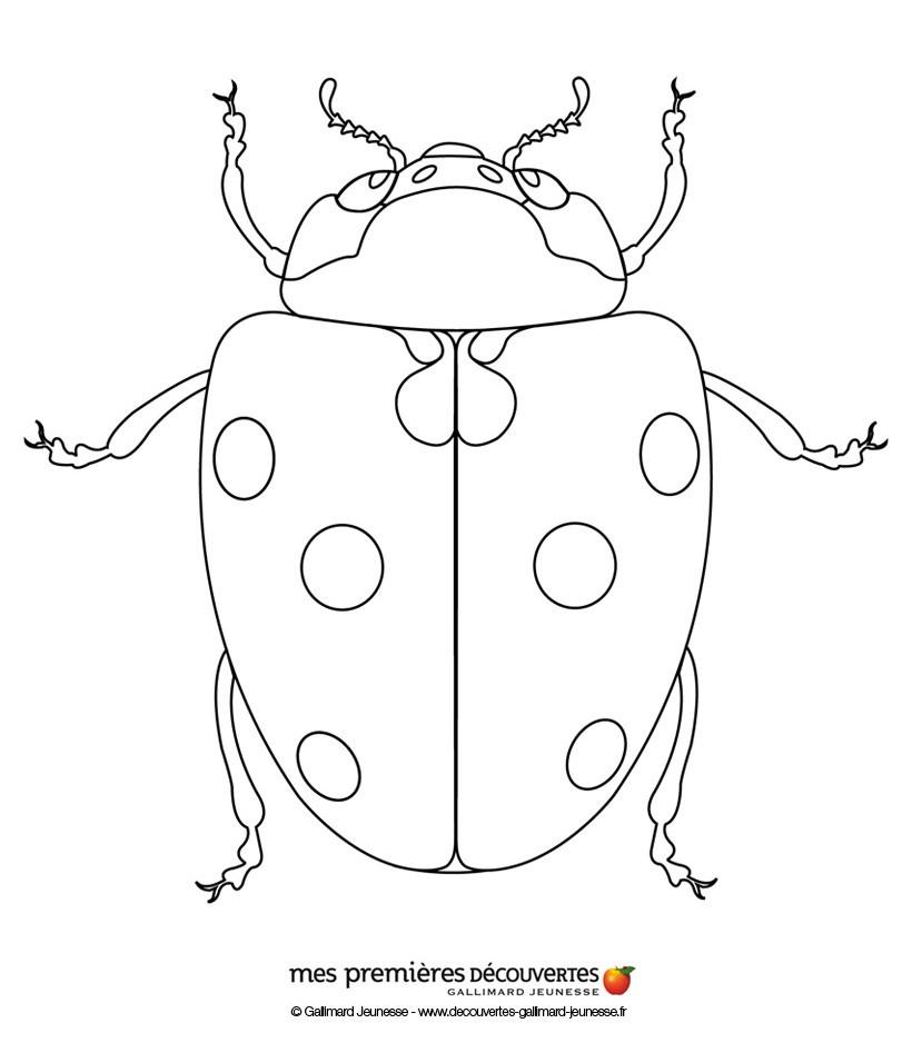 Dibujos para colorear la mariquita - es.hellokids.com