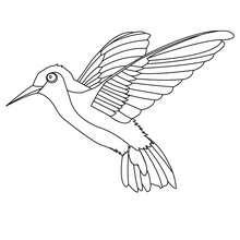 Dibujo el colibrí - Dibujos para Colorear y Pintar - Dibujos para colorear ANIMALES - Dibujos PAJAROS para colorear - Colorear pajaros COLIBRI