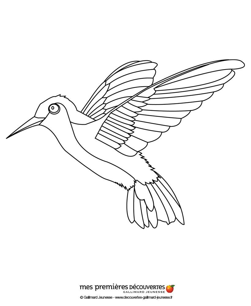 Dibujos para colorear el colibrí - es.hellokids.com