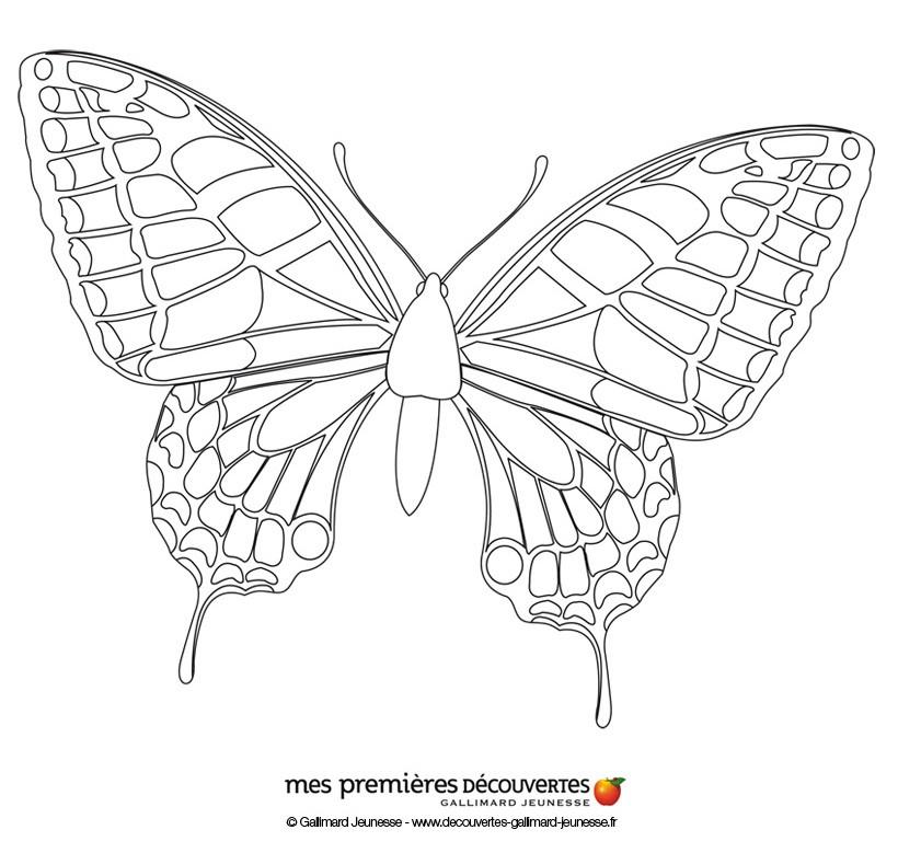 Dibujos para colorear la mariposa - es.hellokids.com