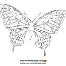 La mariposa - Dibujos para Colorear y Pintar - Dibujos para colorear ANIMALES - Dibujos INSECTOS para colorear - Dibujos para colorear MARIPOSAS - Pintar MARIPOSAS