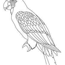 Dibujo LORO - Dibujos para Colorear y Pintar - Dibujos para colorear ANIMALES - Dibujos AVES para colorear - Dibujo para colorear LORO