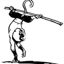 Dibujo para colorear : El mono: Maestro Mono