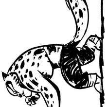 Dibujo para colorear : Tigresa