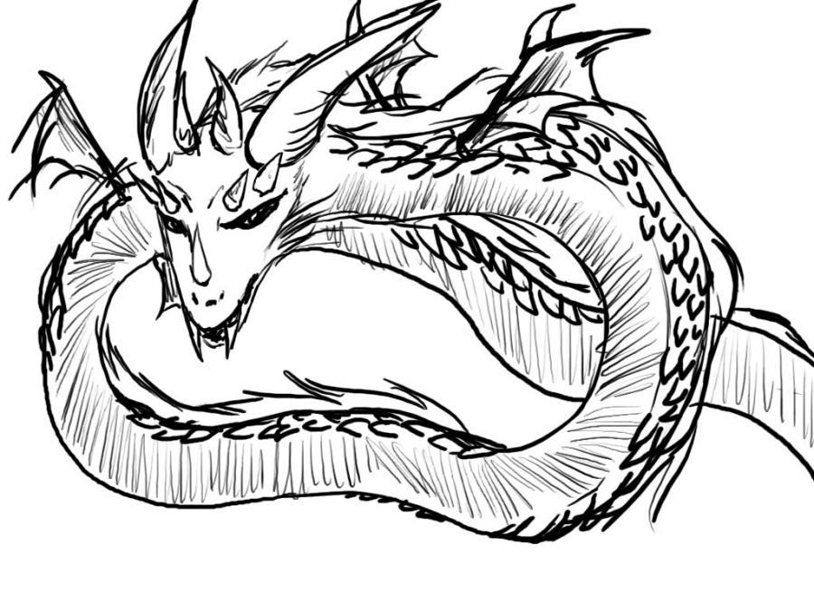 le-dragon-d-amandine