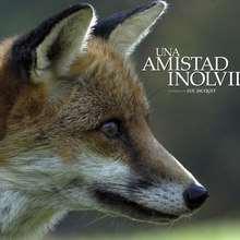 Fondo de pantalla : Retrato de la zorra