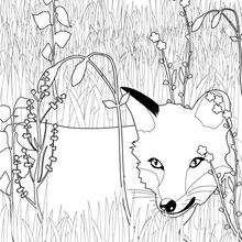 Dibujo del zorro - Dibujos para Colorear y Pintar - Dibujos de PELICULAS colorear - Dibujos para colorear UNA AMISTAD INOLVIDABLE