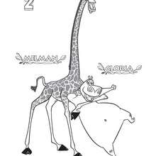 Dibujo de Melman y Gloria - Dibujos para Colorear y Pintar - Dibujos de PELICULAS colorear - Dibujos para colorear y pintar MADAGASCAR - Dibujos para colorear MADAGASCAR 2