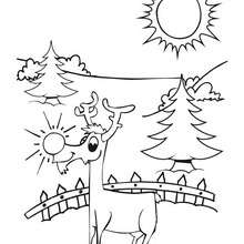 Dibujo del reno Rodolfo - Dibujos para Colorear y Pintar - Dibujos para colorear FIESTAS - Dibujos para colorear de NAVIDAD - Colorear dibujos RENOS NAVIDEÑOS