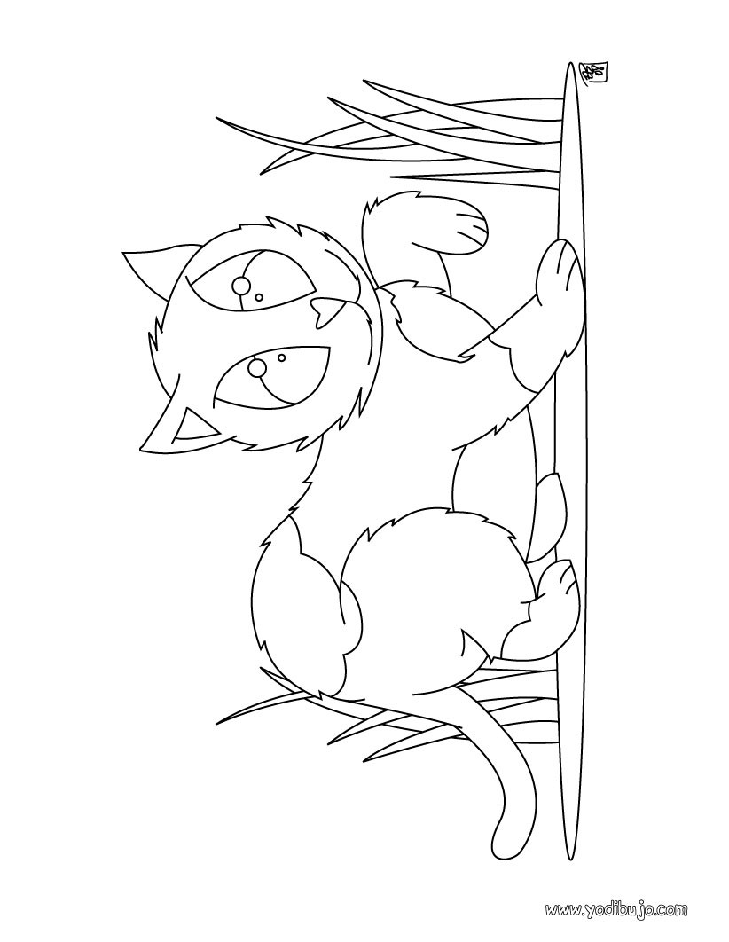 Dibujo de un gato salvaje - Dibujos para colorear e imprimir GATOS