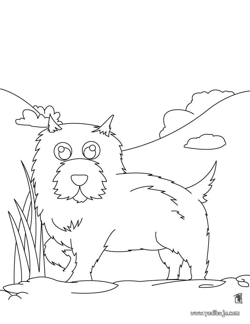 Dibujo para colorear : un perro Chow-chow