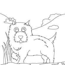 Dibujo de un perro Chow-chow - Dibujos para Colorear y Pintar - Dibujos para colorear ANIMALES - Dibujos PERROS para colorear - Dibujo para colorear PERRO CHOW CHOW