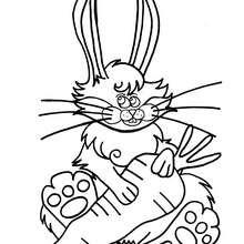 Dibujo para colorear : conejo con zanahoria