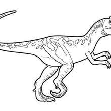 Dibujo para colorear : Allosaurio