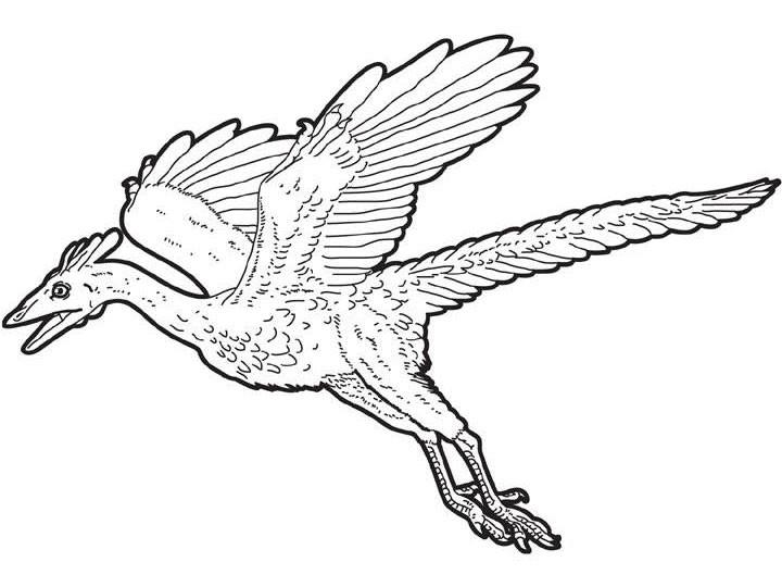 Dibujos para colorear arqueopterix volador - es.hellokids.com