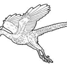 Dibujo para colorear : Arqueopterix volador