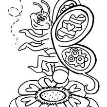 Dibujo mariposa rosa y abeja - Dibujos para Colorear y Pintar - Dibujos para colorear ANIMALES - Dibujos INSECTOS para colorear - Dibujos para colorear MARIPOSAS - Colorear MARIPOSA ROSA