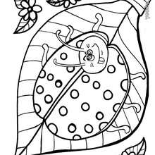 Dibujo para colorear : mariquita hermosa