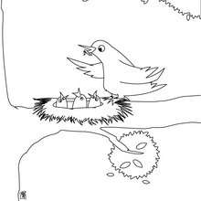 Dibujo para colorear : nido de pájaro