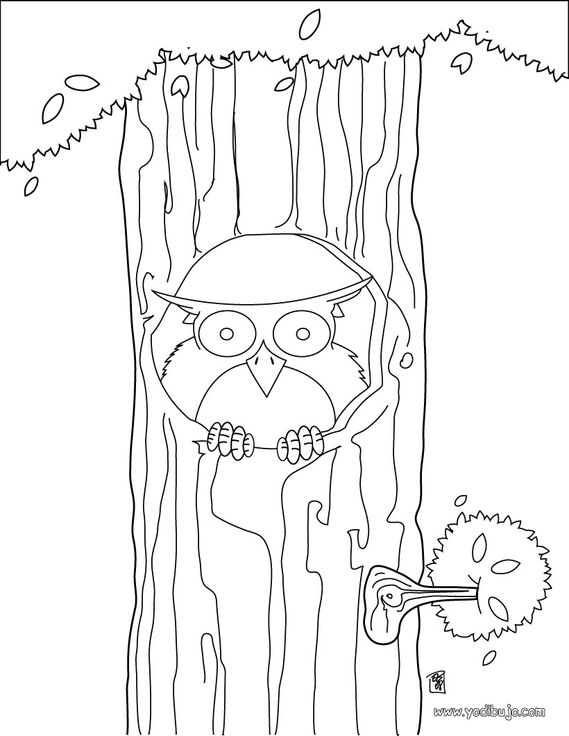 Dibujo para colorear : búho