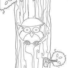 Dibujo búho - Dibujos para Colorear y Pintar - Dibujos para colorear ANIMALES - Dibujos AVES para colorear - Dibujos para colorear BUHO