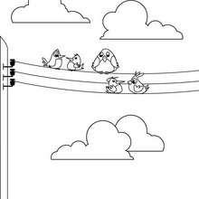 Dibujo para colorear : gorriones
