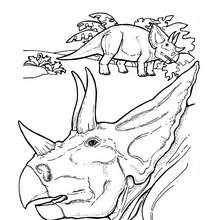 Dibujo cabeza  triceratops - Dibujos para Colorear y Pintar - Dibujos para colorear ANIMALES - Dibujos para colorear DINOSAURIOS - Pintar dinosaurio TRICERATOPS
