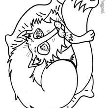 Dibujo zorro durmiendo - Dibujos para Colorear y Pintar - Dibujos para colorear ANIMALES - Dibujos ANIMALES SALVAJES para colorear - Dibujos ANIMALES DE LA SELVA para colorear - Colorear ZORRO