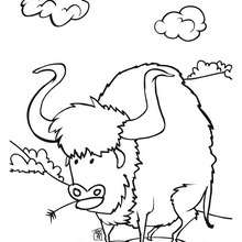 Dibujo bufalo - Dibujos para Colorear y Pintar - Dibujos para colorear PERSONAJES - Vaqueros e indios: dibujos para pintar