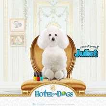 Fondo de pantalla : Hotel para perros: Juliet modelo