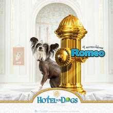 Fondo de pantalla : Hotel para perros: Romeo el seductor