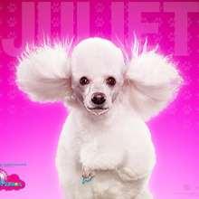Fondo Hotel para perros: Juliet - Dibujar Dibujos - Dibujos para DESCARGAR - FONDOS GRATIS - Fondos e íconos: Hotel para Perros