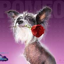 Hotel para perros: Romeo - Dibujar Dibujos - Dibujos para DESCARGAR - FONDOS GRATIS - Fondos e íconos: Hotel para Perros