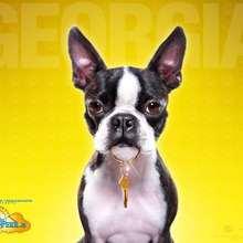 Hotel para perros: Georgia - Dibujar Dibujos - Dibujos para DESCARGAR - FONDOS GRATIS - Fondos e íconos: Hotel para Perros