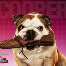 Hotel para perros: Cooper - Dibujar Dibujos - Dibujos para DESCARGAR - FONDOS GRATIS - Fondos e íconos: Hotel para Perros