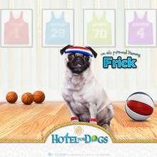 Fondo de pantalla : Fondo Hotel para perros: Frick basketball