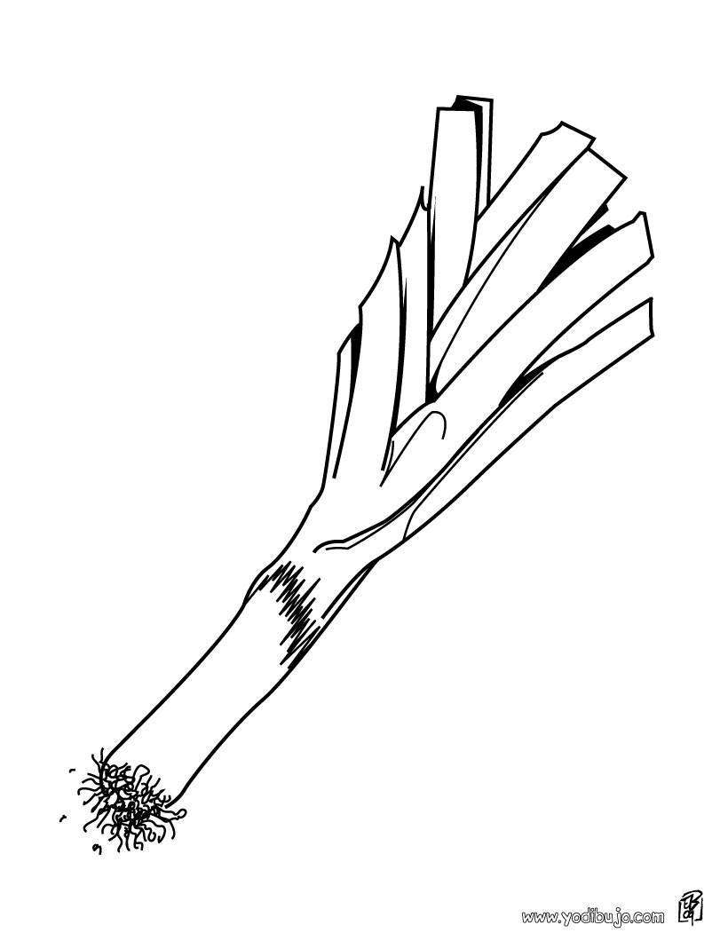 Dibujo para colorear : un puerro
