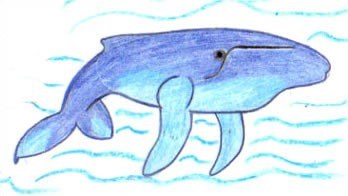 Dibuja una ballena - Dibujar Dibujos - Aprender cómo dibujar paso a paso - Dibujar dibujos ANIMALES - Dibujar los animales del mar