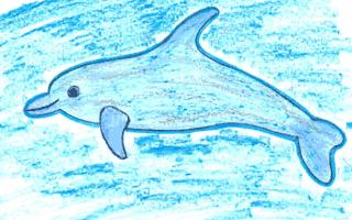 Dibuja un delfín - Dibujar Dibujos - Aprender cómo dibujar paso a paso - Dibujar dibujos ANIMALES - Dibujar los animales del mar