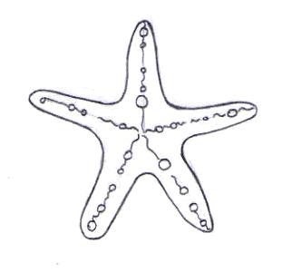 Dibuja una estrella de mar - Dibujar Dibujos - Aprender cómo dibujar paso a paso - Dibujar dibujos ANIMALES - Dibujar los animales del mar