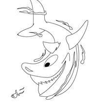 Dibujo de un tiburón - Dibujos para Colorear y Pintar - Dibujos para colorear ANIMALES - Dibujos ANIMALES MARINOS para colorear - Colorear MAMIFEROS MARINOS - Colorear TIBURONES
