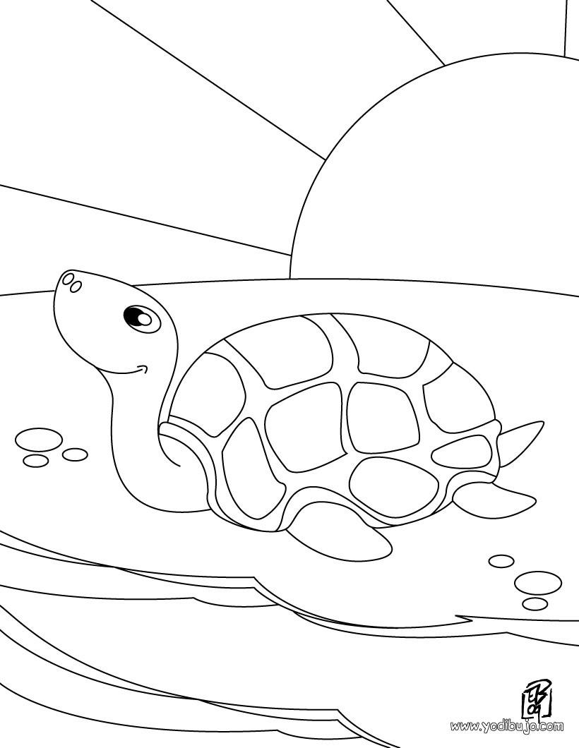 Dibujos para colorear una tortuga de mar - es.hellokids.com