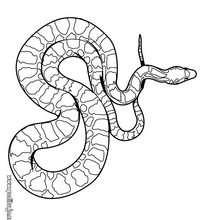 Dibujo para colorear : cobra