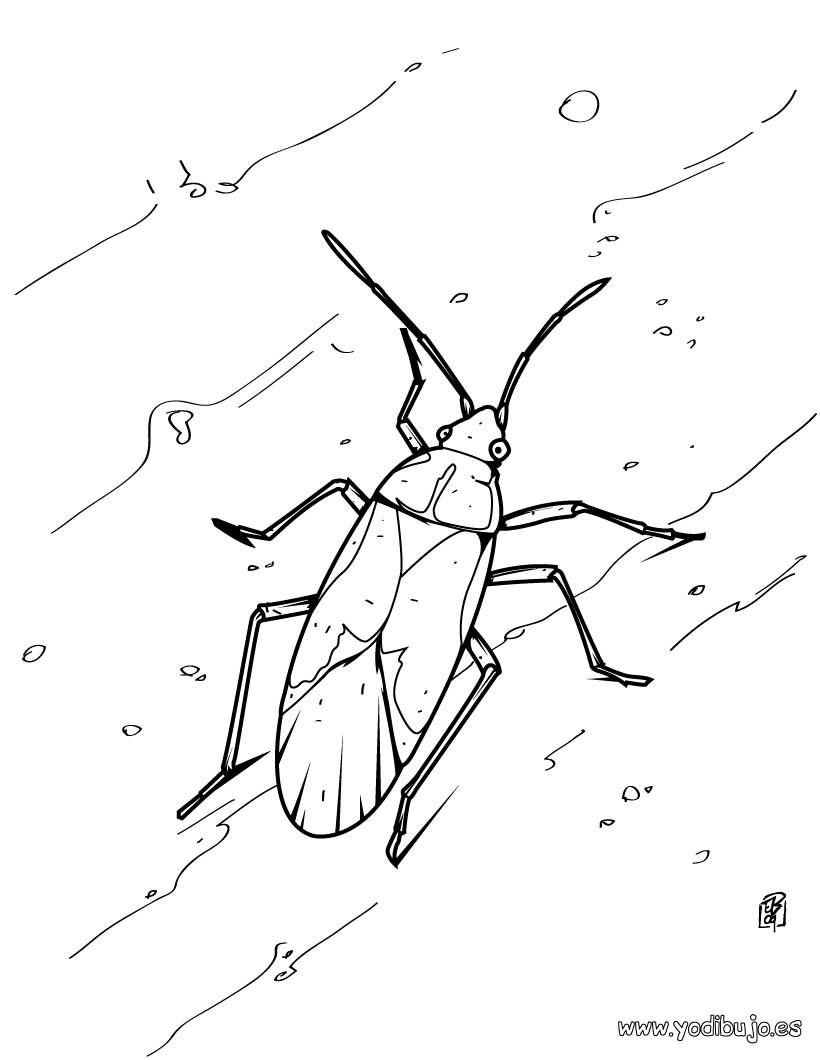 Dibujos para colorear detallado de un mosquito - es.hellokids.com