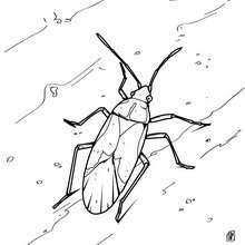 Dibujo cucaracha - Dibujos para Colorear y Pintar - Dibujos para colorear ANIMALES - Dibujos INSECTOS para colorear - Insectos para colorear GRATIS