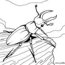 Dibujo escarabajo - Dibujos para Colorear y Pintar - Dibujos para colorear ANIMALES - Dibujos INSECTOS para colorear - Insectos para colorear GRATIS