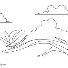 Dibujo de una libélula - Dibujos para Colorear y Pintar - Dibujos para colorear ANIMALES - Dibujos INSECTOS para colorear - Insectos para colorear GRATIS