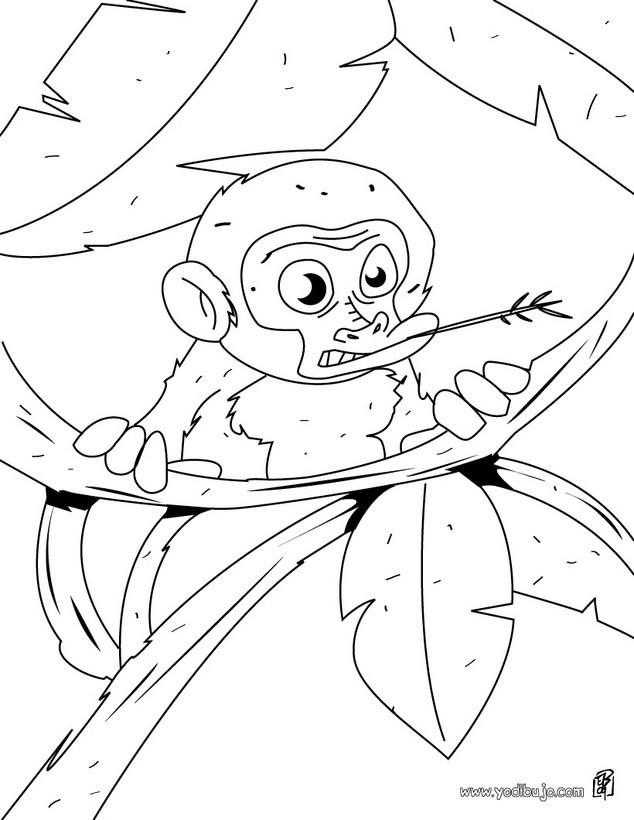 Dibujos para colorear un mono ardilla - es.hellokids.com